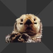 Sea Otter Meme - create meme roller derby otter otter sea otter pictures