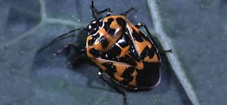 insect identification bug identification garden pests us and