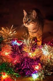 261 christmas cats u0026 kittens images christmas