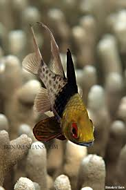 138 best fish images on pinterest drawings nature and deep blue