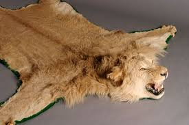 Fake Lion Skin Rug With Head Stunning Lion Skin Rug Simple Decoration Rugs Lion Skin Rug