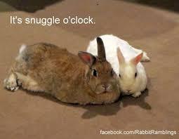 Snuggle Meme - it s snuggle o clock rabbit rabbits cuteanimals cuteanimal