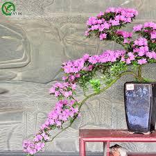 2017 azalea flowers seeds bonsai seeds garden plants flower seeds