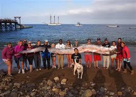 5 meters to feet five meter sea creature found off california coast