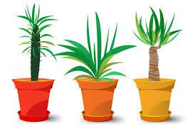 popular indoor plants archives plants by bird