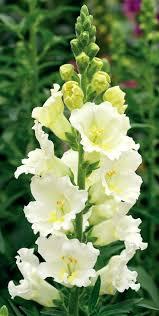 2419 best flowers images on pinterest inside plants flower