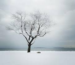 black cherry tree in winter photo by a j sherwood island