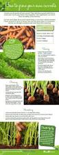 Growing Your Own Vegetable Garden by Veg Garden How To Grow Your Own Carrots David Domoney