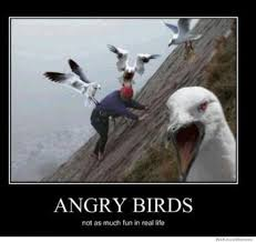 Crazy Bird Meme - top 20 most funny angry birds memes and jokes angry birds real