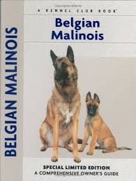 belgian malinois for sale malinois puppies for sale malinois puppies for sale puppies for