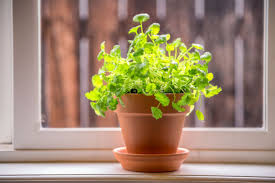 here u0027s how to grow your own vegetables herbs and citrus indoors