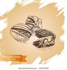 painted coffee beans sketch vector drawing stock vector 346199048