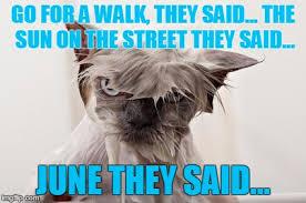 They Said Meme Generator - angry wet cat meme generator imgflip new pinterest cat