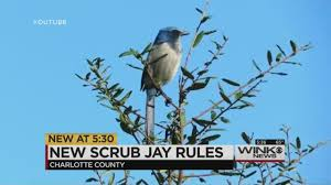Map Of Englewood Florida by Building Now Cheaper Faster On Scrub Jay Habitats In Charlotte County