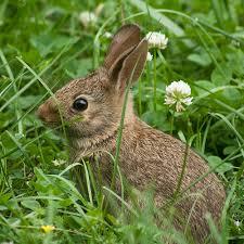 rabbit garden garden casual rabbit proof your garden