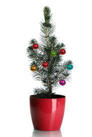 real mini christmas tree with lights grow your own mini living christmas tree