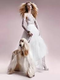 afghan hound jackets 36 best mi galgo afgano images on pinterest afghan hound