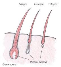 growing out pubic hair does burnt hair grow back new doctor insights
