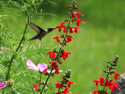 hummingbird gardens landscape design build it and they will