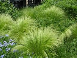 96 best parks images on garden grass ornamental
