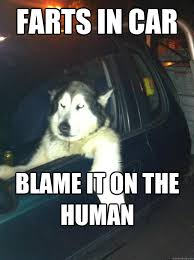Dog In Car Meme - farts in car blame it on the human mean dog quickmeme
