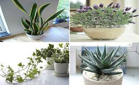 Plants For The Bedroom by These 4 Plants For Your Bedroom Will Cure Insonia And Sleep Apnea