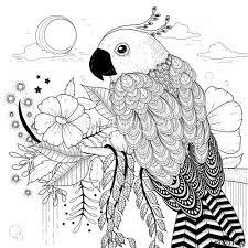 parrots coloring pages 193 best coloring parrot images on pinterest parrot coloring