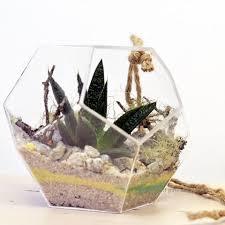 succulent terrariums u2013 ps terrariums