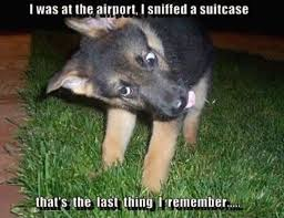 Funny German Shepherd Memes - explore ccandace06 s photos on photobucket neji pinterest