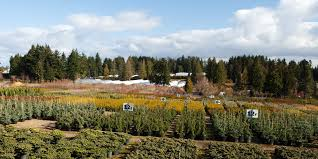 Green Thumb Landscape by Green Thumb Garden Centre Nanaimo Vancouver Island U0027s Largest