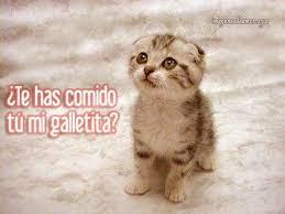 imagenes de gatitos sin frases imágenes de gatitos