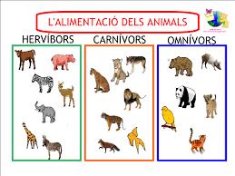 imagenes de animales carnivoros para imprimir dibujos para colorear animales carnivoros herbivoros ideas
