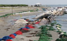 Louisiana beaches images Thanks bp for making louisiana 39 s beaches among the most polluted jpg