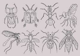 bugs clipart insects clipart bugs pen drawing summer clipart