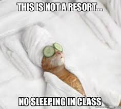 Sleeping Cat Meme - this is not a resort no sleeping in class pered cat meme