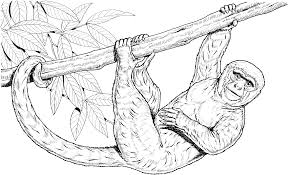 spider monkey coloring pages drawings 9913