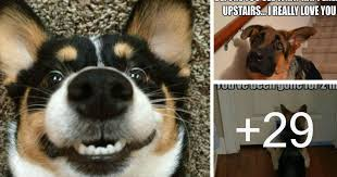 Dog Owner Meme - 32 memes that remind us how insane our dogs truly are