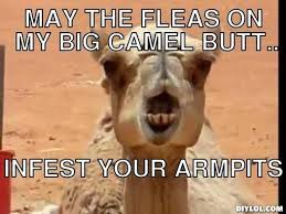 Camel Memes - 20 very funny camel memes and photos i can has cheezburger