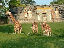 Detroit Zoo Night Lights by Volunteer Opportunities At Belle Isle Nature Zoo Part Of The