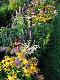 10 Best Perennials And Flowers by The 10 Best Perennial Flowers For Any Yard Summer Perennials