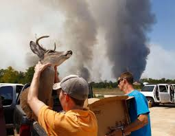 Wildfire Equipment Operators by Wildfire Burns Near Magnolia Houston Chronicle