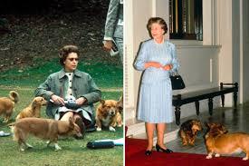 queen elizabeth dog queen elizabeth corgis why the queen owns so many corgis