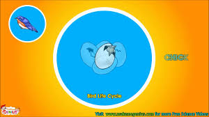 bird life cycle video for kids science for kids by makemegenius