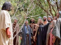 free bible images jesus uses a fig tree to teach about faith and