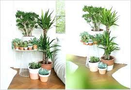live indoor plants plants for living room plant for living room ad amazing ideas indoor