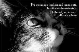 Awesome Quotes About Cats Being - quotes about cats awesome cat quotes quotes about cat yourdictionary