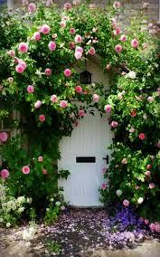 153 best rose garden images on pinterest garden ideas gardening