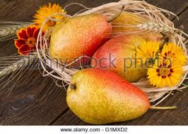 pears thanksgiving still stock photo royalty free image