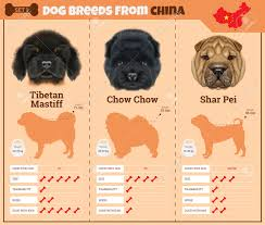 types of dogs dogs breed vector infographics types of dog breeds from china