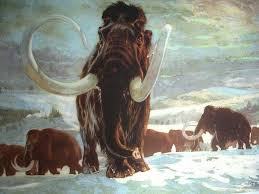 woolly mammoth woolly rhinoceros original signed art